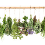 Best Herbs for Radiant and Healthy Skin