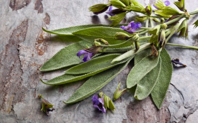 Benefits of Sage: More Than a Kitchen Herb