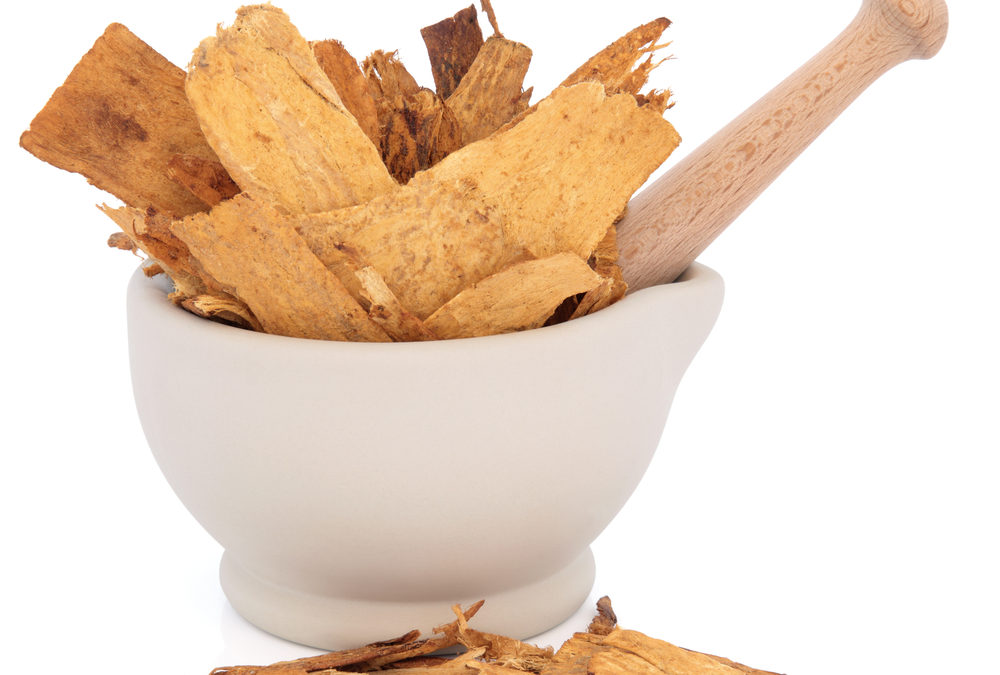 Top Benefits of Astragalus: Immunity & More