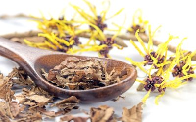 Uses for Witch Hazel + Top Benefits