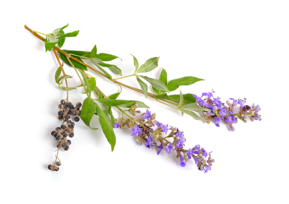 Benefits of Chasteberry (Vitex) for Balanced Hormones