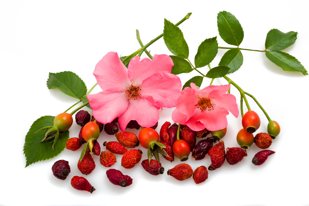 7 Amazing Benefits of Rose Hips for Skin & Health