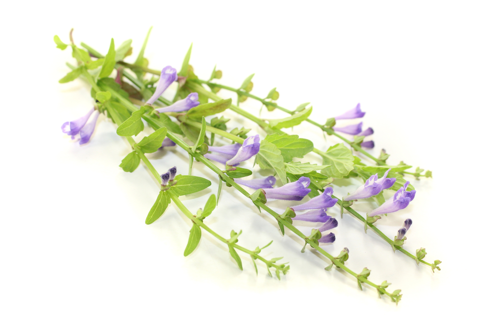 Benefits of Skullcap for Stress, Sleep, & Tension